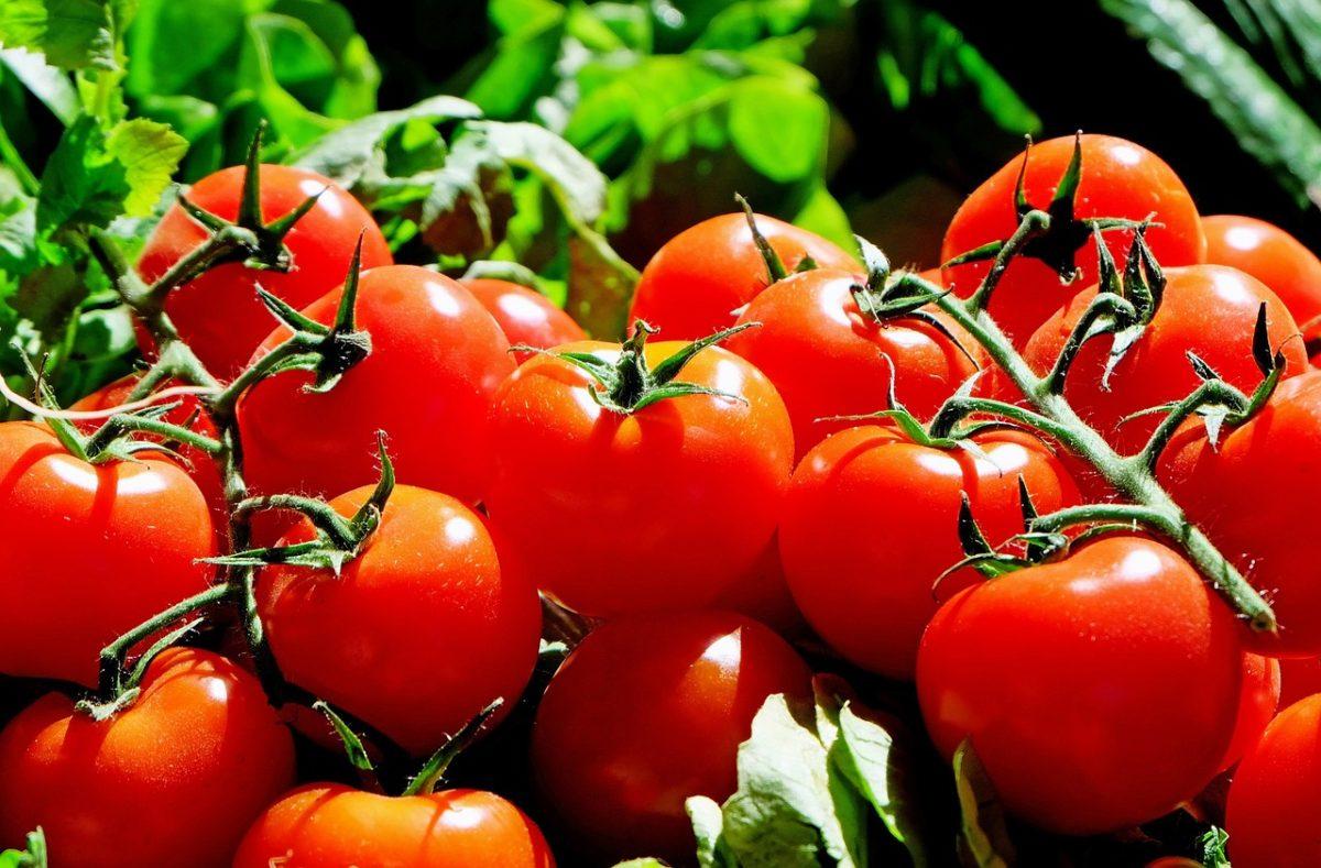 トマトはダイエットに役立つ効果が盛りだくさんのお野菜です!!
