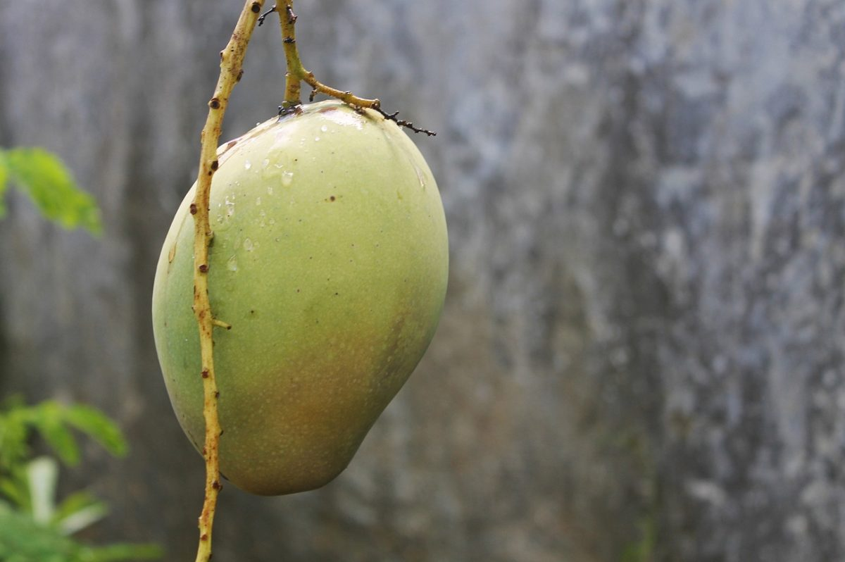 アフリカンマンゴーはダイエットに◎? 空腹時の食欲を抑制する働きがある!?